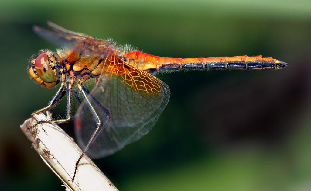ali di insetti ispirano pale eoliche più efficienti