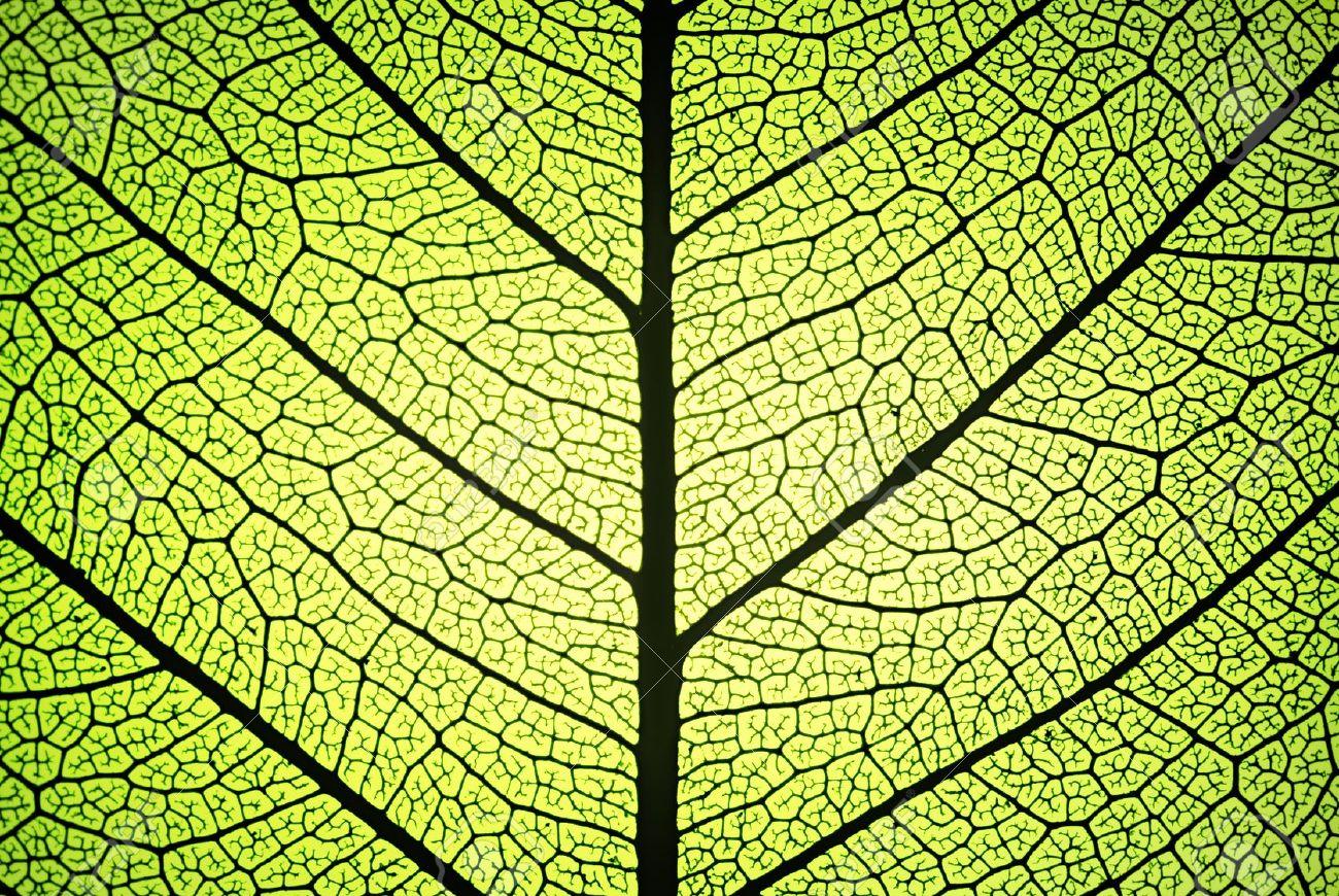 batterie ricaricabili bioispirate, materiali murray, batterie ispirate a foglie